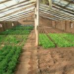 Creación de invernaderos